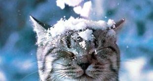К чему снится видеть снег